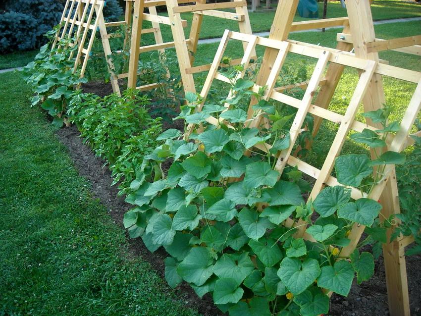 Деревянные шпалеры довольно популярны среди владельцев огородов