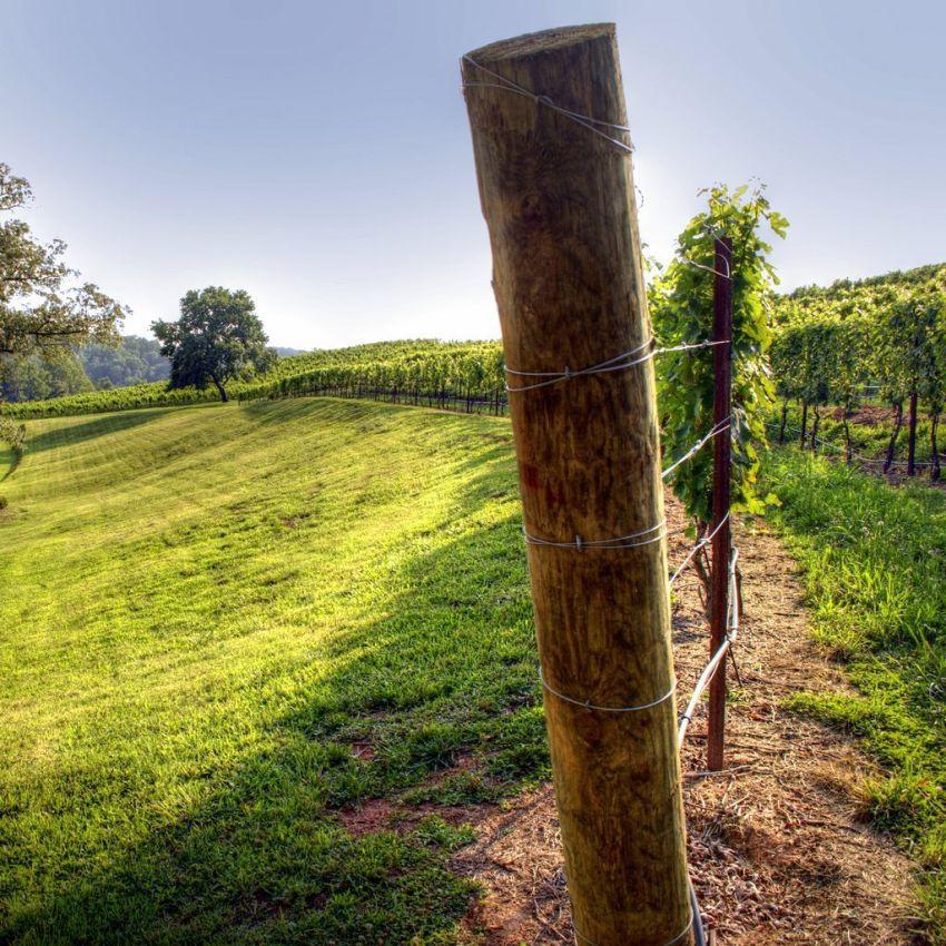 Лучшим видом опор для винограда является проволочная шпалера