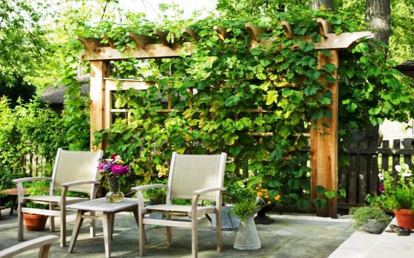 Купив шпалеру для винограда можно обеспечить надежную опору для растения и создать уют на участке