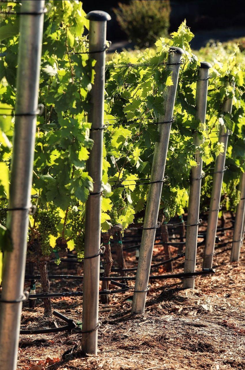 Наиболее долговечным вариантом являются металлические столбы в качестве опор для винограда