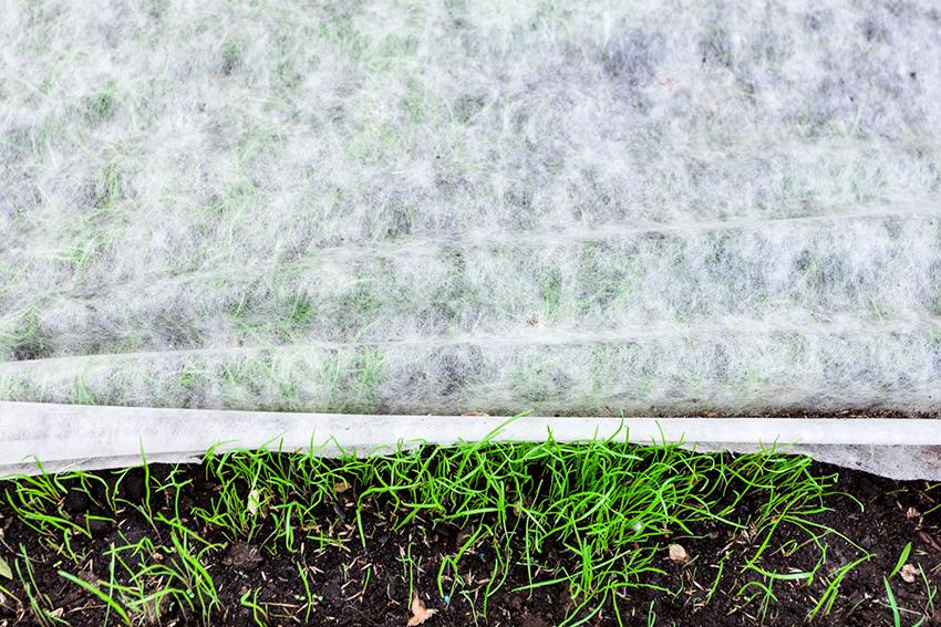 Укрывной материал для грядок называют спанбонд, агроволокно или агротекстиль