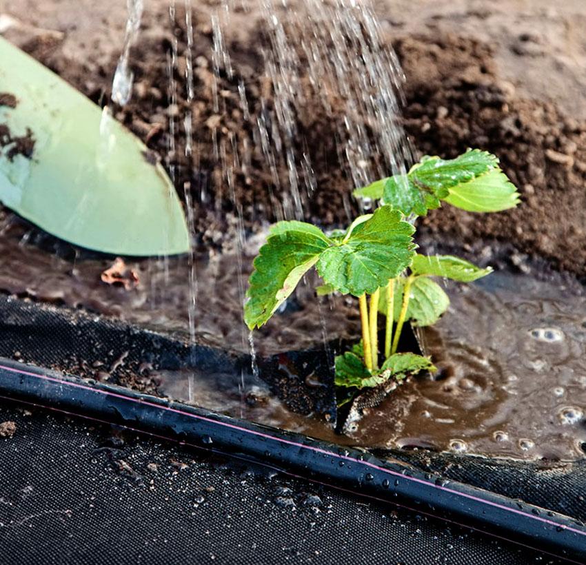 Прежде чем укрывать растения в материале нужно сделать отверстия с необходимым расстоянием