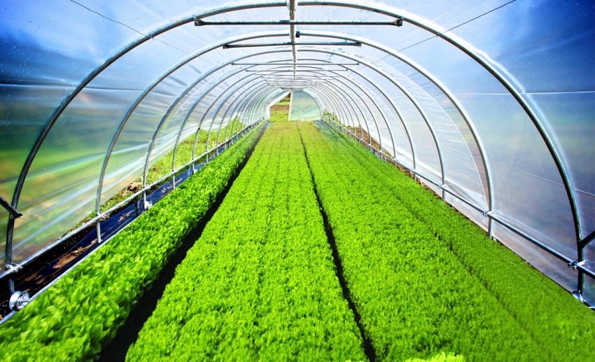 Агроволокно делает парники и теплицы более эффективными