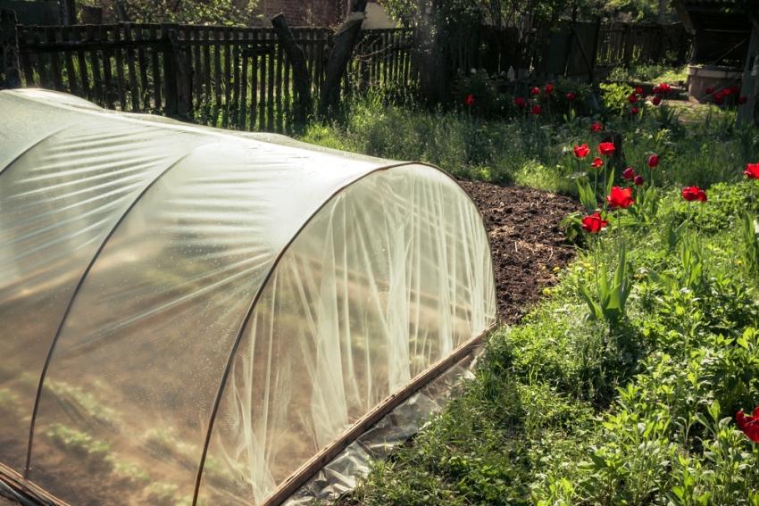 Агротекс хорошо сохраняет тепло и пропускает до 90% солнечного света