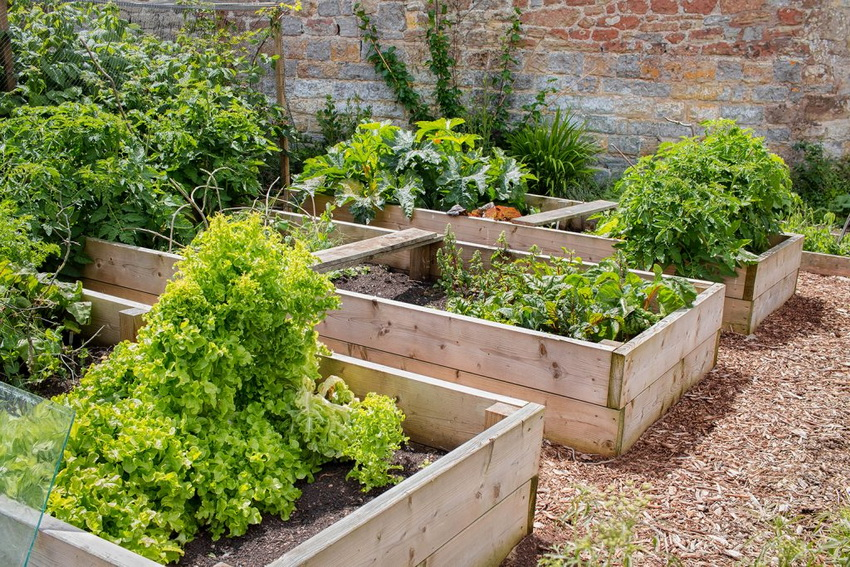 Красивый огород потребует усилий и времени, но результат превзойдет все ожидания