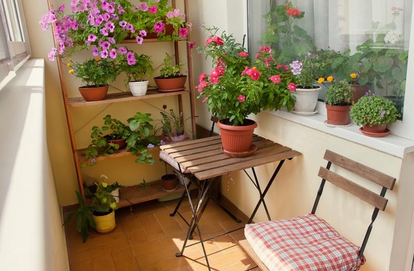 Для хранения большого количества цветов на балконе не обойтись без стеллажа