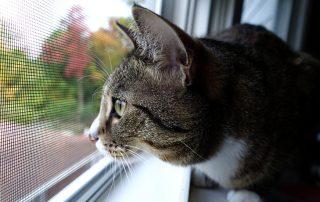 «Антикошка»: сетка на окно для защиты домашних питомцев