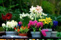 Если нет возможности разбить настоящий цветник, то всегда можно создать оранжерею из цветов в горшках