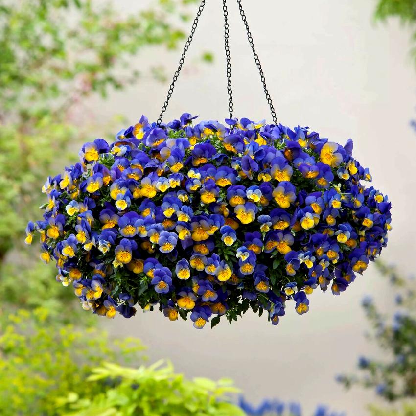 Верхние ярусы приусадебного участка можно украсить цветами в подвесных кашпо