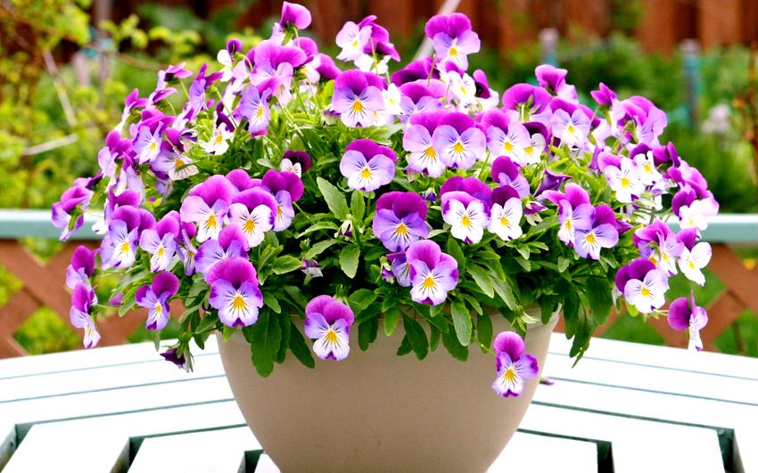В регулярном поливе нуждаются даже самые устойчивые к засухе цветы