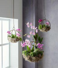 Для цветов, которые не любят частый полив, подойдут подвесные изделия
