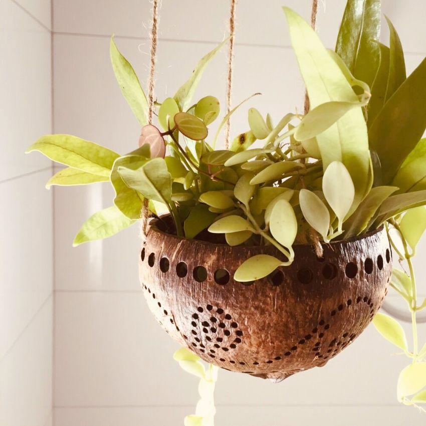 Благодаря кашпо можно озеленить любую комнату квартиры, кухню или прихожую, главное учитывать потребности растений