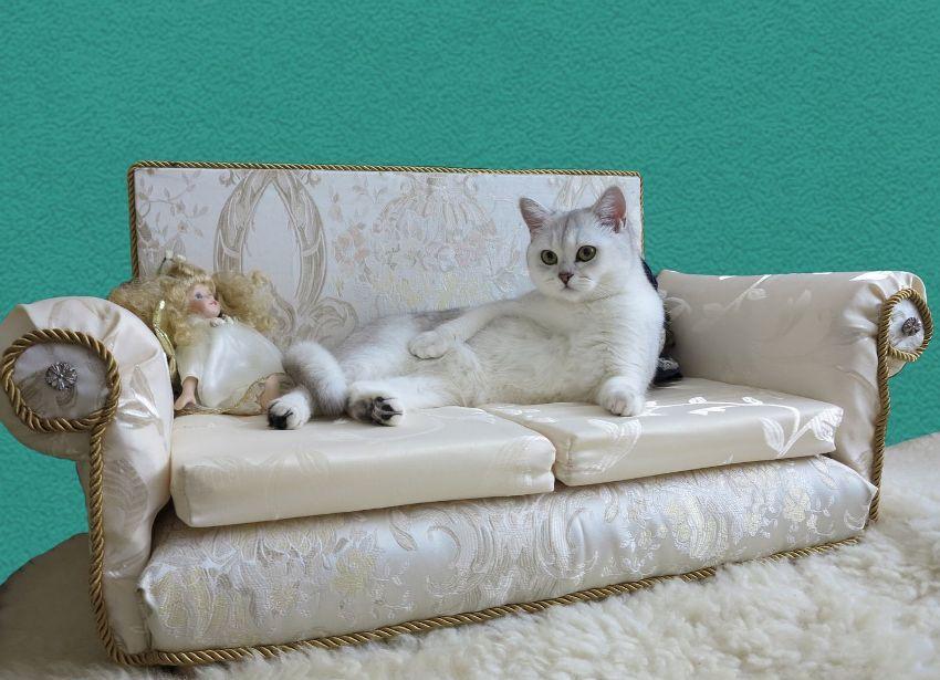 Минусом дивана-лежака является то, что не каждый кот захочет на таком спать