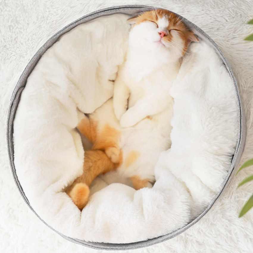 Дороговизна изделия не является гарантией того, что животному внутри будет комфортно