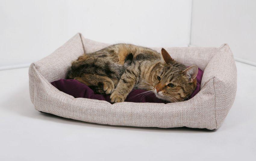 Лежаки с бортиками для котов просты в изготовлении