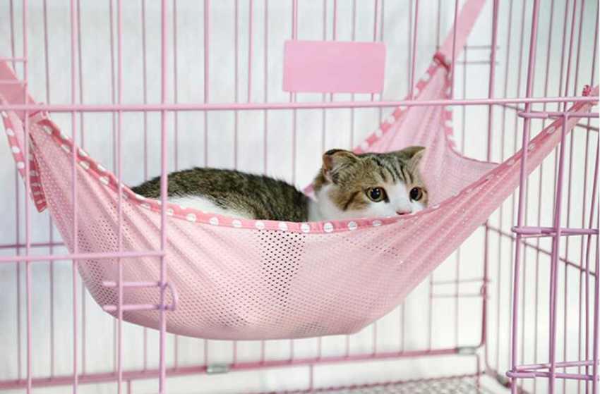 Гамак подойдет не всем животным, но некоторые кошки будут от такого спального места в восторге