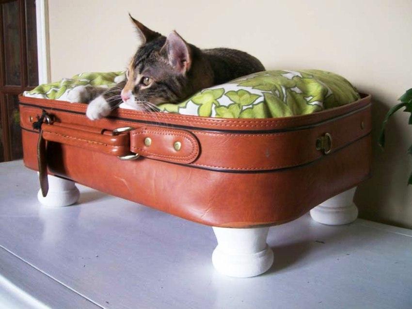 Стоит отрезать крышку в чемодане, чтобы питомец не травмировался, если он закроется