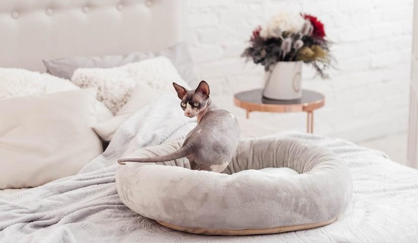 Есть множество видов кошачьих лежанок, сделанных из подручных средств