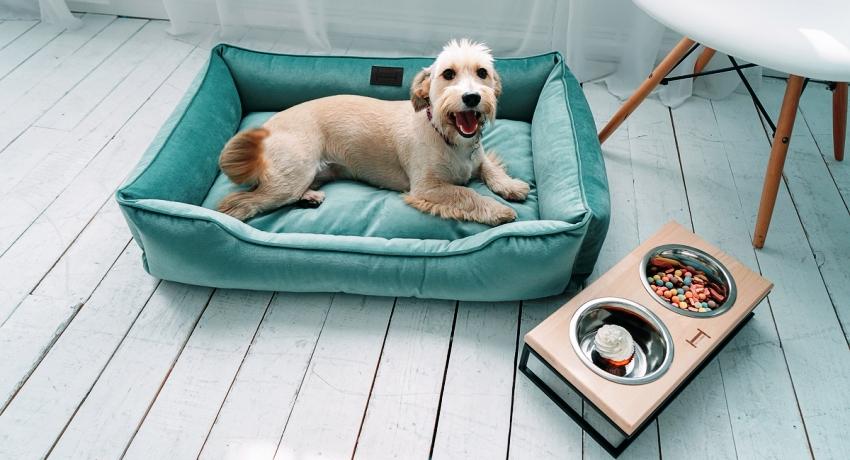 Кровать для собаки – неотъемлемый атрибут для проживания животного в квартире или доме