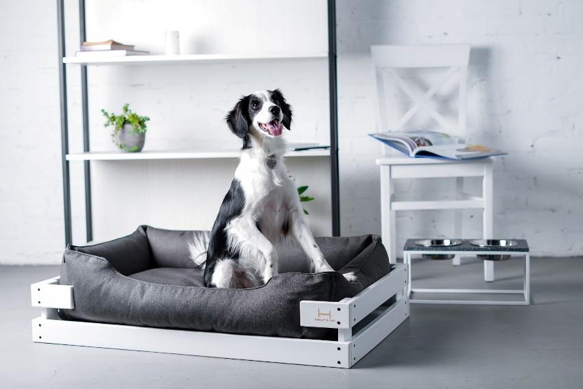 Кровати для больших собак называются лежаками