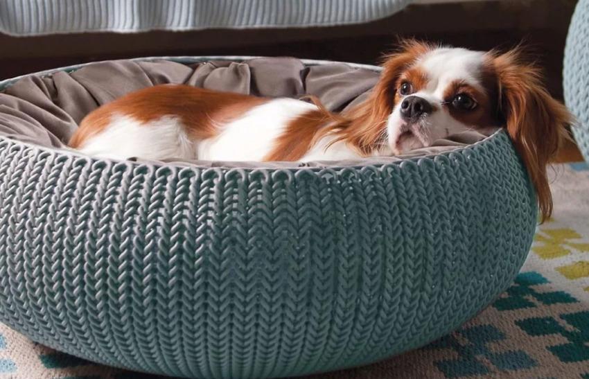 Для активных собак лучше выбрать подушки или модели с низкими бортами