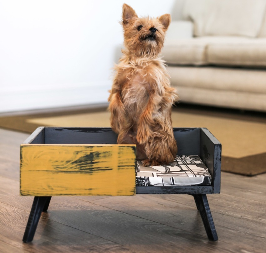 Необычным решением станет использование прикроватной тумбочки в качестве спального места для собаки