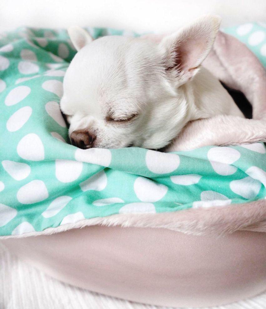 Лежанка из мягкого материала хорошо подходит для пород чихуахуа, той-терьер, шпиц и прочих миниатюрных собак