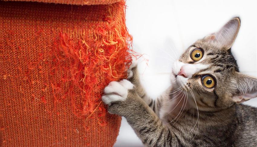Если нет когтеточки, животное будет стачивать ногти о мебель, обои и другие поверхности