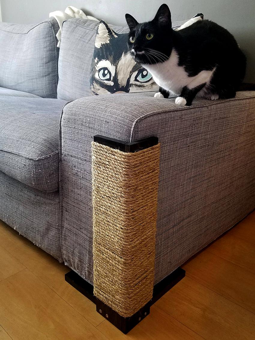 Корма для кошек ACANA купить в Киеве: цена, отзывы